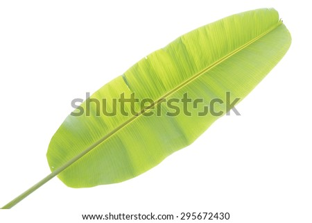 Banana leaf isolated with clipping path - stock photo