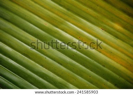 banana leaf pattern for the background