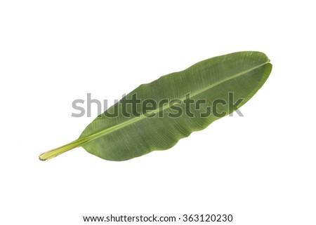 Banana leaf plant tree