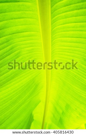 Banana Leave pattern background - stock photo