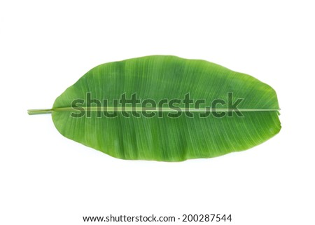 Banana leaves isolated on white background - stock photo
