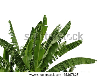 Banana leaves on white background - stock photo