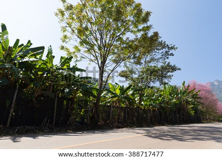 banana tree at the side of the country road with mountain view