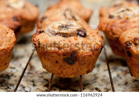 banana, walnut and chocolate chip muffins - stock photo