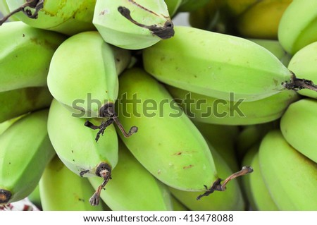 Bananas are harvested before its fruit is ripe, it is yellow. - stock photo