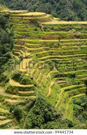 Banaue Rice Terraces, Philippine Cordilleras - stock photo