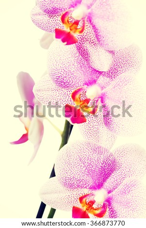 Banch of orchid flower - stock photo