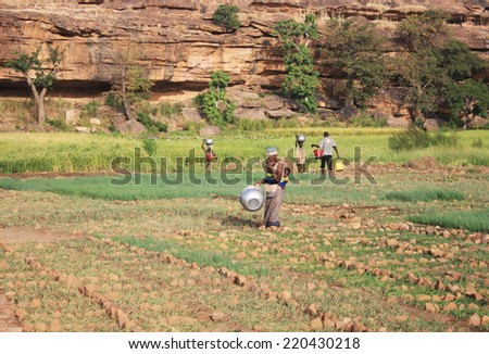 BANDIAGARA, MALI - OCTOBER 2, 2008:  Unidentified group of people work in the field in bandiagara in the Mopti region in Mali on october 2, 2008, Bandiagara, Mali - stock photo