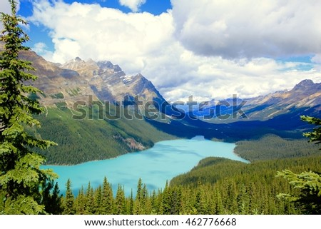 Banff National Park - July 31, 2016: Breathtaking view of the Peyto Lake