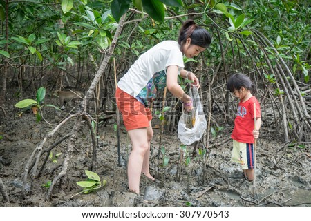 Bangkok, Thailand - August 9, 2015: Bangkok on August 9, 2015. A family is planting small trees to conserve the mangrove forest in Thailand.