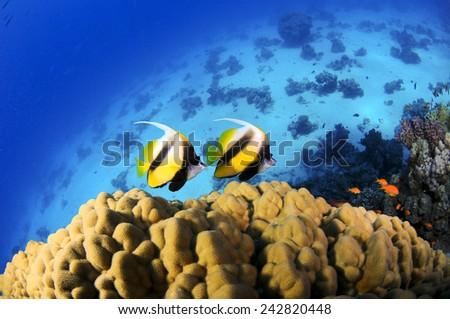 Banner Fish - stock photo
