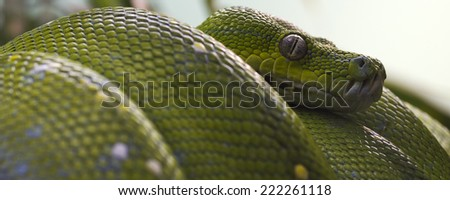 banner of a green tree snake closeup - stock photo