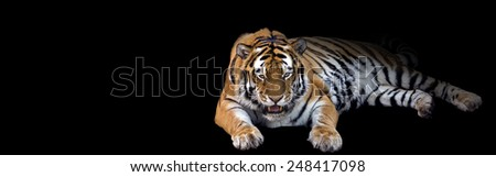 banner of a growling tiger on a black background with room for text
