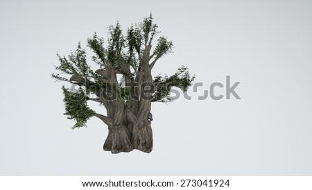 baobab tree isolated on white - stock photo