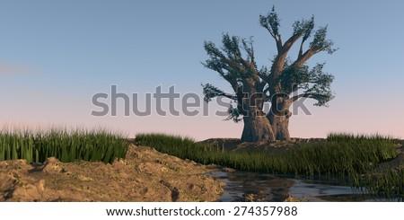 baobab tree on desert sand terrain - stock photo