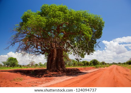 Baobab tree on red soil road. Landscape of Kenya, Africa