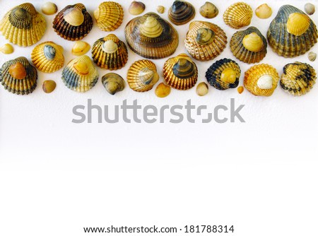 Bar of sea shells in upper border over white background  - stock photo