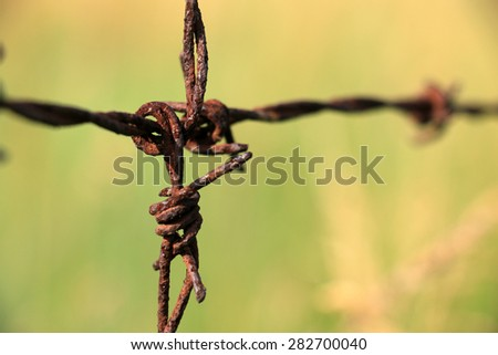 Barbed wire have old and green background - stock photo