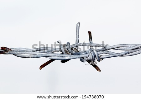 barbed wire isolated on white backgound - stock photo