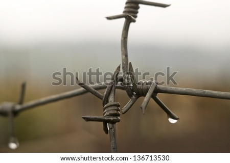 Barbed wire with drops of a rain on a background of the sky. - stock photo