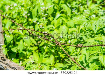 Barbed wire with natural background, Thailand. - stock photo
