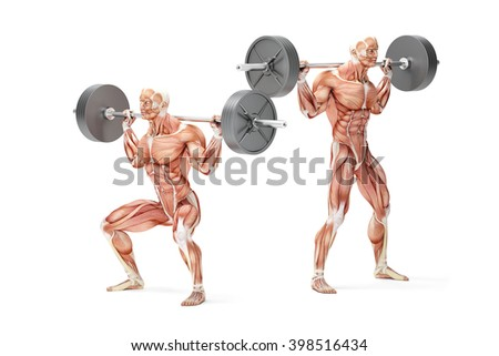 Barbell Squat Exercise. Anatomical 3D illustration. Isolated with clipping path. - stock photo