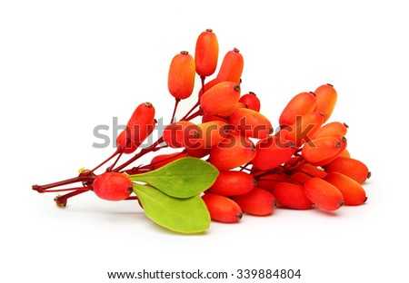 Barberry twig with leaves isolated on a white background