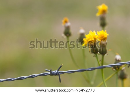 Barbwire in front of flowers - stock photo