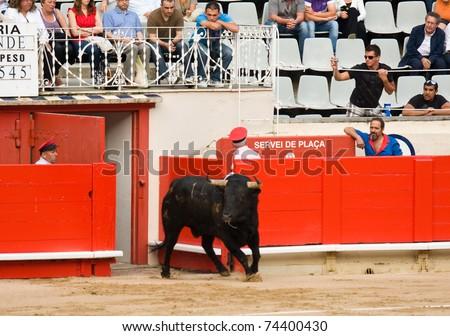 BARCELONA - JUNE 6: Bullfighting, typical Spanish tradition where a bullfighter kills a bull. June 6, 2010 in Barcelona (Spain). - stock photo