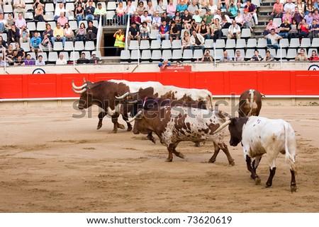 "BARCELONA - JUNE 6: ""Corrida"" (bullfighting) of bulls, a typical Spanish tradition where a torero (bullfighter) kills a bull. June 6, 2010 in Barcelona (Spain). - stock photo"