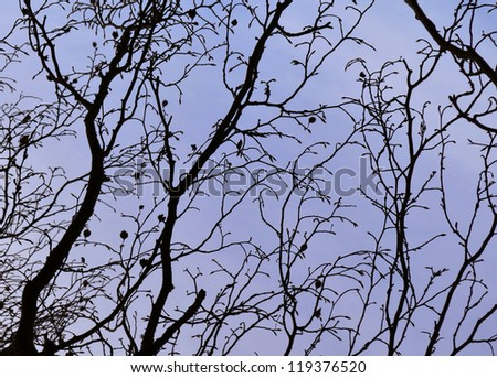 Bare Branches - stock photo