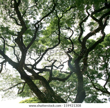 Bare Branches of a tree - stock photo