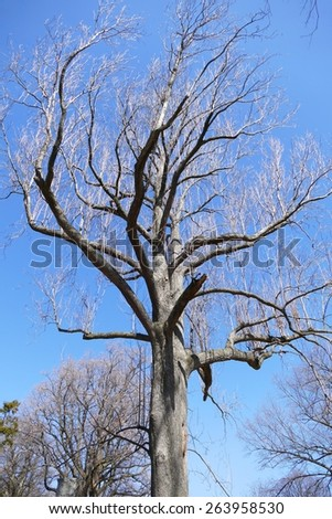 Bare branches of a tree against a clear blue winter sky - stock photo