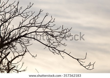 bare branches of a tree at sunrise sun