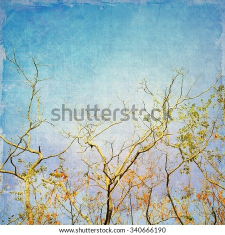 Bare branches of locust tree on blue sky. Vintage style. - stock photo