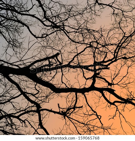 bare branches of trees - stock photo