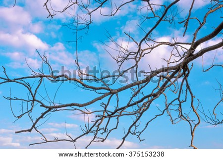 Bare branches of winter trees against blue cloudy sky at sunset - stock photo