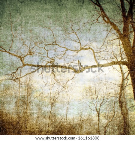 Bare branches on blue sky - stock photo