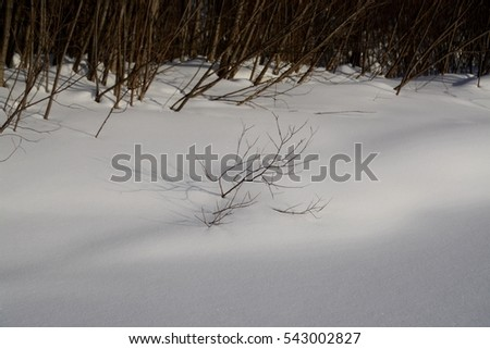 Bare bush from under the snow.