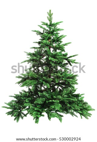 bare Christmas tree isolated on white background