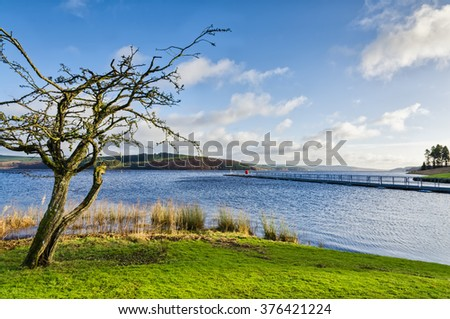 Bare tree beside Keilder Water Reservoir - stock photo