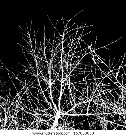 bare tree branches against a black sky