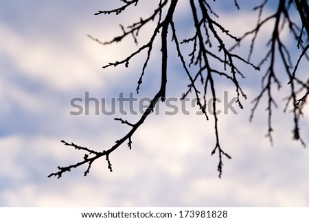 bare tree branches against the sky at sunset