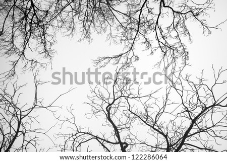 Bare Tree Branches on a white pale sky - stock photo