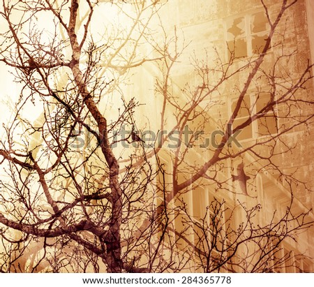 Bare tree branches with birds overlaid with an abandoned building for a dream-like look. - stock photo