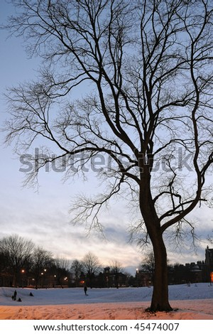 Bare tree in a snowy winter park silhouetted at dusk. Sodium lighting colours the foreground. - stock photo