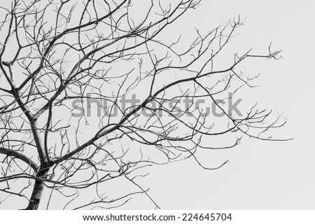 Bare Tree in Black and White - A closeup image of a bare tree in black and white during the fall season. - stock photo