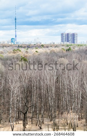 bare tree in forest and city in cold spring day - stock photo
