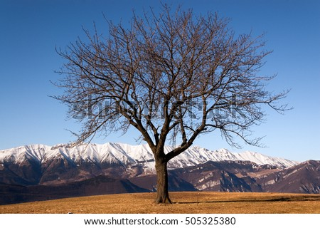 Bare tree in winter in Italian Alps (Monte Baldo - Baldo Mountain) near Verona, seen from the Plateau of Lessinia. Veneto, Italy