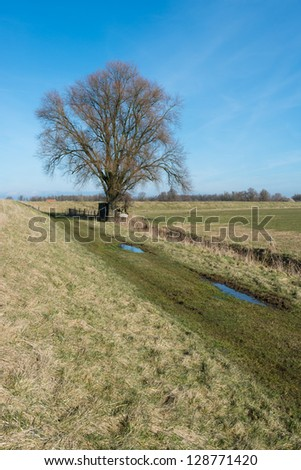 Bare tree with a small and primitive wooden hut in an agriculture landscape.